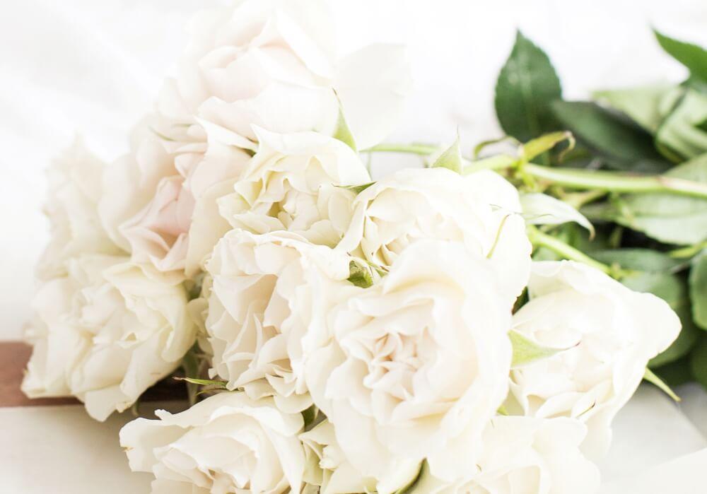 白いバラのフリー写真